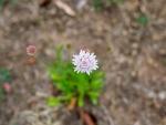DSC_1392-weed.jpg